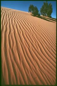 Shonto Dune, John Running Collection (NAU.PH.2013.4.1.5.12.203)