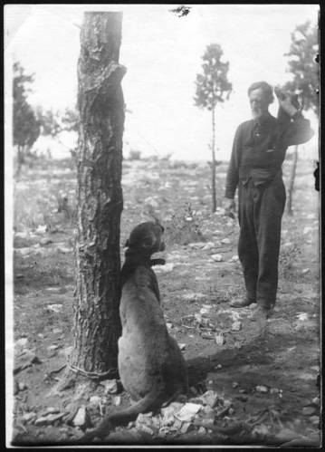 """Buffalo Jones with mountain lion that he trapped</br><a href=""""http://archive.library.nau.edu/cdm/ref/collection/cpa/id/71556"""" target=""""_blank"""">Emery Kolb Collection NAU.PH.568.974</a>"""