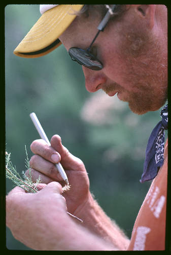 """Researcher examining a sprig of tamarisk</br><a href=""""http://archive.library.nau.edu/cdm/ref/collection/cpa/id/120229"""" target=""""_blank"""">John Running Collection NAU.PH.2013.4.1.21.26.49</a>"""