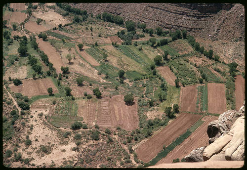 "Supai farm lands above Navajo Falls from Red Cliff top</br><a href=""http://archive.library.nau.edu/cdm/ref/collection/cpa/id/118312"" target=""_blank"">George Billingsley Collection NAU.PH.2000.54.6.14.26"