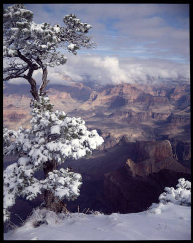 """Winter Mood- Grand Canyon Nat'l Park, Arizona. Accenting the vivid tones of rock walls, a snowy pinyon tree at Mohave Point on the South Rim frames an even more memorable display of the famous abyss. A blanket of clouds covers the distant North Rim. [Photographer's caption] </br><a href=""""http://archive.library.nau.edu/cdm/ref/collection/cpa/id/11794"""" target=""""_blank"""">Josef Muench Collection NAU.PH.2003.11.4.1.10.M4978</a>"""